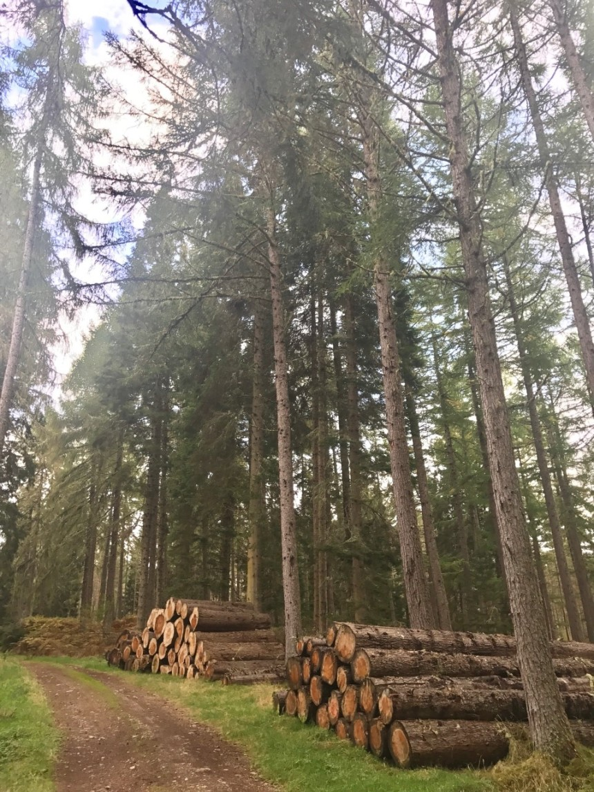 Fort Augustus Forest 2