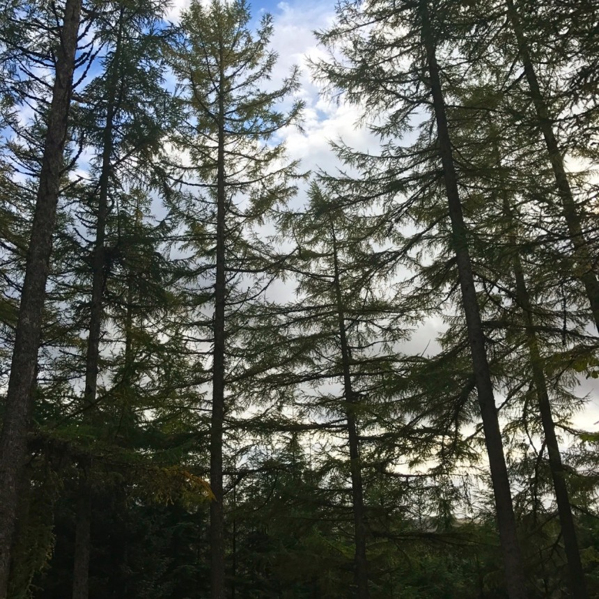 Fort Augustus Forest