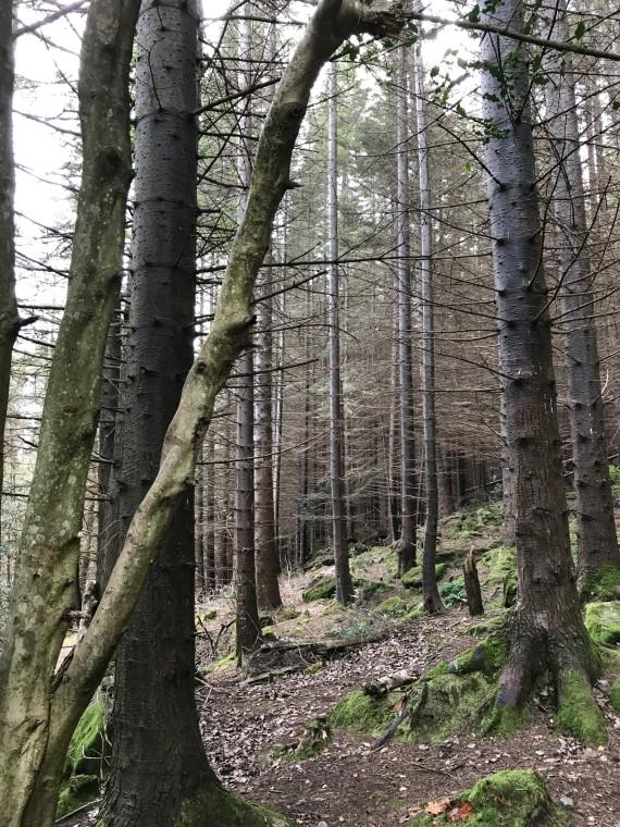 Slieve donard trees